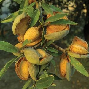 Jojoba, Coconut, and Almond Oils -- GIFTS!