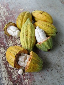 http://www.scratchmommy.com/wp-content/uploads/2013/02/Raw-Green-Cocoa-Beans