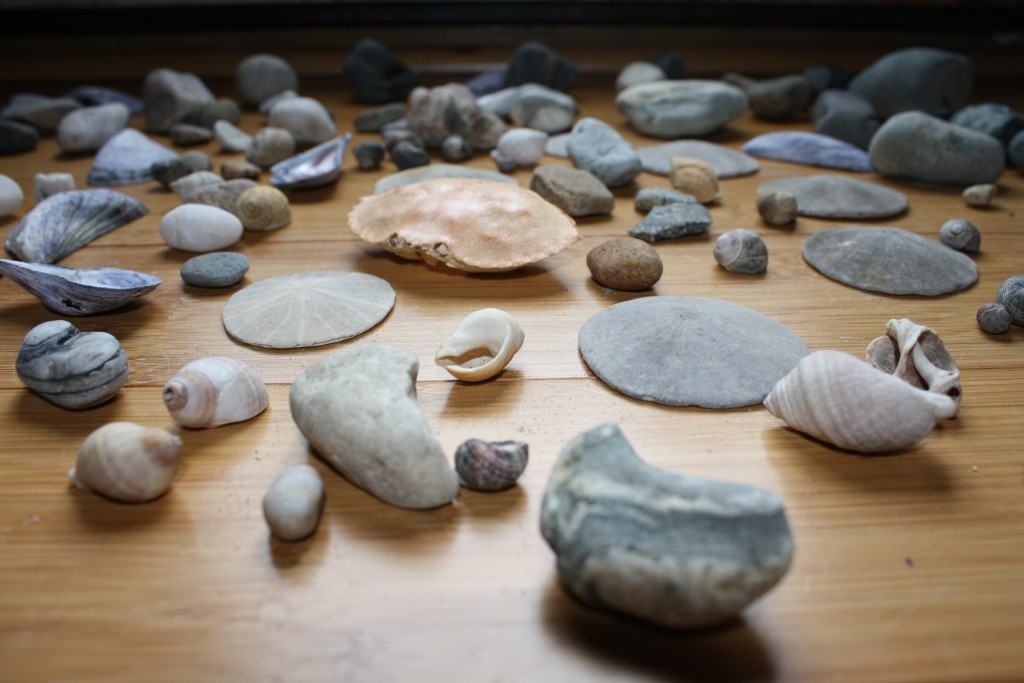Summer stones, sanddollars and crab shell collected on the beaches of Mt. Desert Island