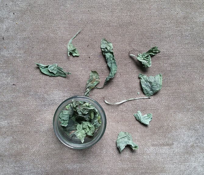 DIY Plantain Salve Recipe {Soothes and Heals}
