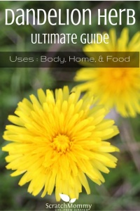 How To Use Dandelion (for home, body, AND food)!- Scratch Mommy