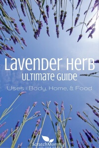 Lavender Herb Ultimate Guide (learn how to use lavender for home, body, & food)- Scratch Mommy