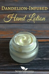 DIY Dandelion-Infused Hand Lotion Recipe (easy, nourishing, and smells amazing!)- Scratch Mommy