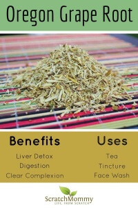Oregon Grape Root. Learn how to use this beautiful root and the many benefits you can receive.- Scratch Mommy